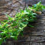Cząber ogrodowy- Satureja hortensis