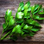 Lubczyk ogrodowy – Levisticum officinale