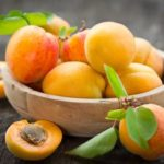 Morela- Prunus Armenica