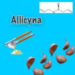 Allicyna- substancja aktywna czosnku