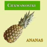 Ananas ciekawostki