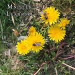 Mniszek lekarski- suplementy