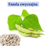 Fasola zwyczajna łac. Phaseolus vulgaris